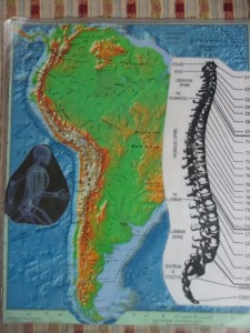 This hunchbacked spine can be noted only on a topographical map. Note the exactitude of the tailbone similarity.