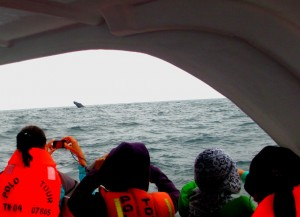 This is Whale Watching